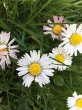种植花红色黄色自然庭院太阳美好的草白色 库存照片