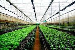 种植苗圃 免版税库存照片