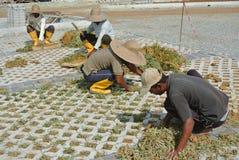 种植草介于中间的具体块的建筑工人 免版税库存照片