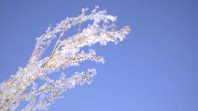 种植被盖的雪反对明亮的蓝天晴朗的冬日 股票视频