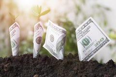 种植长大在土壤,概念的美元和树作为救球地球和世界环境日 库存图片
