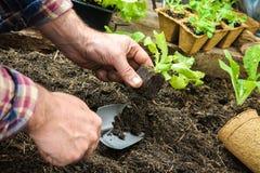 种植年轻幼木的农夫 免版税库存图片