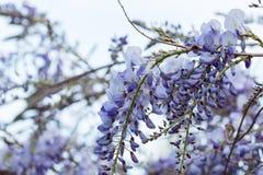 种植紫色 图库摄影