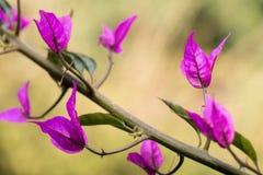 种植紫色 库存图片