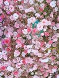 种植~flowers 免版税库存照片