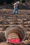 种田和种植与种子 免版税库存照片