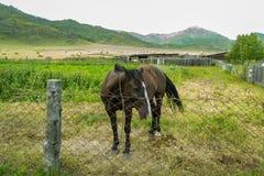 种田在一个领域的阿尔泰山与很多干草堆 库存照片