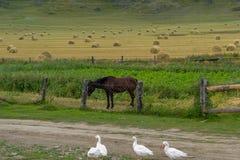 种田在一个领域的阿尔泰山与很多干草堆 库存图片