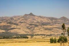 种田在农村埃塞俄比亚,干燥风景的鸡豆 免版税库存照片