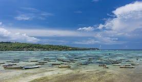 种田在努沙Lembongan,巴厘岛的海草 图库摄影