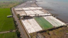种田在印度尼西亚的虾 股票视频