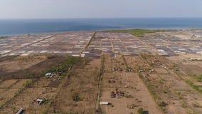 种田在印度尼西亚的虾 股票录像