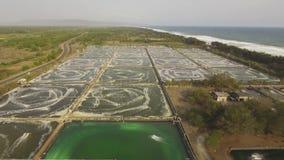 种田在印度尼西亚的虾 影视素材
