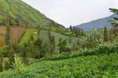 种田在小山倾斜在东爪哇省 免版税库存图片