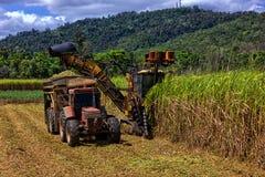 种田在昆士兰,澳大利亚的甘蔗 免版税库存照片