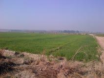 种田在有机的卡尔纳尔 图库摄影