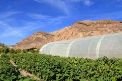 种田在沙漠 免版税库存照片