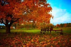 种田在秋天树旁边的工具 免版税图库摄影