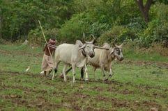 种田在第一场季风以后在印度 免版税库存图片