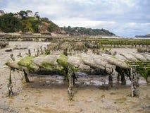 种田在英国的牡蛎 库存图片