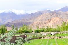 种田在西藏… 图库摄影