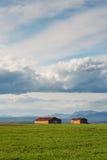 种田在谷物领域的村庄与的蓝天云彩 免版税图库摄影