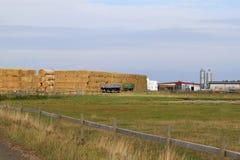 种田在KnävÃ¥ngen附近在Falsterbo,瑞典 免版税图库摄影