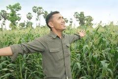 种田感觉的玉米好 免版税库存图片