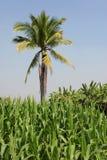 种田热带 免版税库存图片