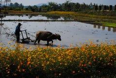 种田的农民在乡下 库存图片