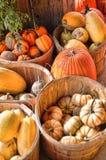 种田的收获有机南瓜季节南瓜 库存照片