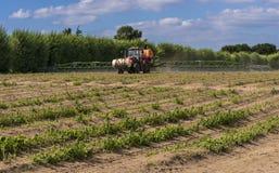种田的芦笋和庄稼喷洒 免版税库存图片