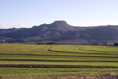 种田的非洲南部 免版税库存照片