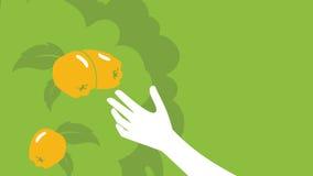 种田的,农业抽象柑橘背景传染媒介 库存照片