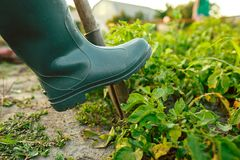 种田,从事园艺,农业和人概念 库存照片