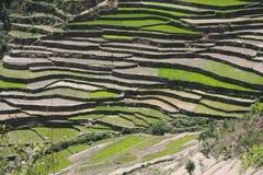 种田uttaranchal喜马拉雅印度干草原的大阳&#21488 图库摄影