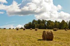 种秣草地和干草堆 图库摄影
