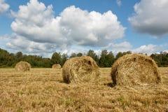 种秣草地和干草堆 库存照片