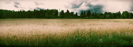 种秣草地散置与可爱的树丛 库存照片