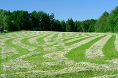 种秣草地 库存图片
