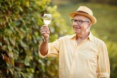 种葡萄并酿酒的人品尝酒在葡萄园里 库存图片