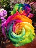 7种颜色玫瑰为中国情人节 免版税库存图片