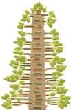 种系发生人类演变的生物演化谱系图解 库存图片