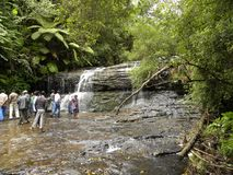 科代卡纳尔,泰米尔纳德邦,印度- 2010 6月13日,负担Shola瀑布 免版税图库摄影