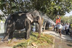 """科伦坡,斯里兰卡†""""2017年2月10日, :mahout清洗大象 免版税库存照片"""