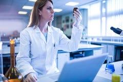 科学家与一台膝上型计算机一起使用在实验室 免版税库存照片