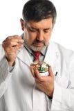 科学家与在培养皿的细菌一起使用 免版税图库摄影