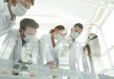 科学家与试管和显微镜一起使用在实验室里 库存照片