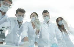 科学家与试管和显微镜一起使用在实验室里 库存图片
