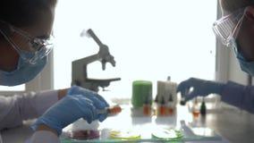 科学家供以人员与妇女品行化工实验入培养皿并且在实验室采取在注射器的样品 股票视频